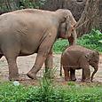 zoo-elephants.jpg