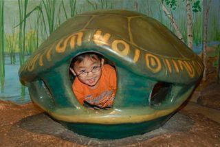 Museum-Eli turtle